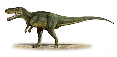 Torvosaurus Tanneri, A Prehistoric Era Print by Sergey Krasovskiy