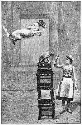 Trained Dogs, 19th Century Print by