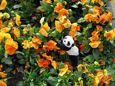 Panda Photograph - Traveling Pandas. Ginny In The Orange Sea Of Pansies. by Ausra Huntington nee Paulauskaite