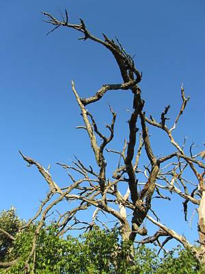 Photograph - Tree-9 by Todd Sherlock