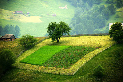 Tree And Field Print by Emanuel Tanjala