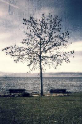 Winter Trees Photograph - tree at lake Constance by Joana Kruse