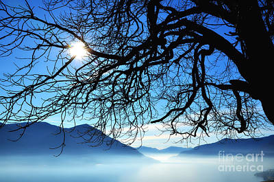 Tree Branches And Sun Print by Mats Silvan