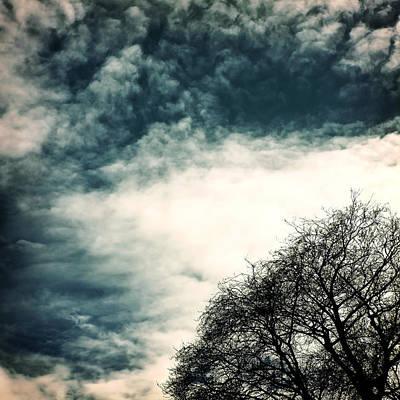 Winter Trees Photograph - Tree Crown by Joana Kruse
