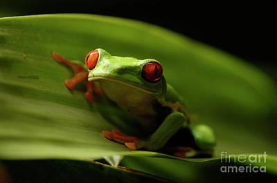 Tree Frog 10 Print by Bob Christopher