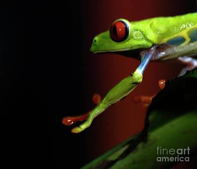 Tree Frog 17 Print by Bob Christopher