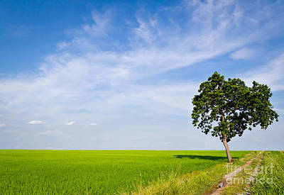 Tree In Paddy Field Print by Mongkol Chakritthakool