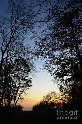 Tree Silhouette At Sunset 1 Print by Bruno Santoro