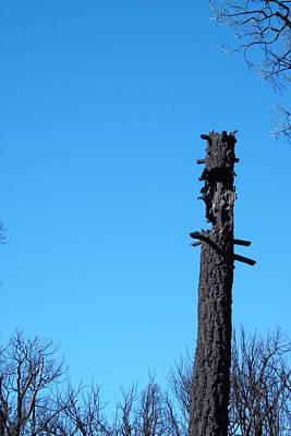 Tree Trunk Burned Print by Naxart Studio