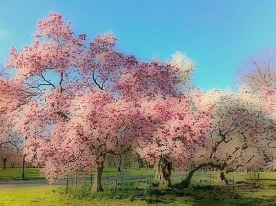 Mixed Media - Trees In Bloom by YoMamaBird Rhonda