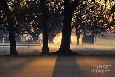 Trees In The Morning Mist Print by Jeremy Woodhouse