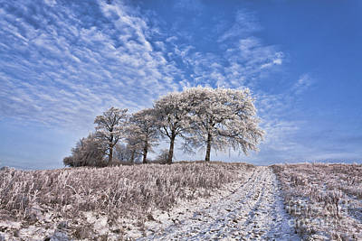 Winter Scenes Photograph - Trees In The Snow by John Farnan