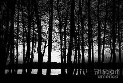 Trees On The Shore Of Lough Neagh County Antrim Northern Ireland Print by Joe Fox