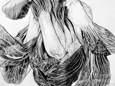 Cabbage Drawing - Triad Study by Lori Lutkenhaus