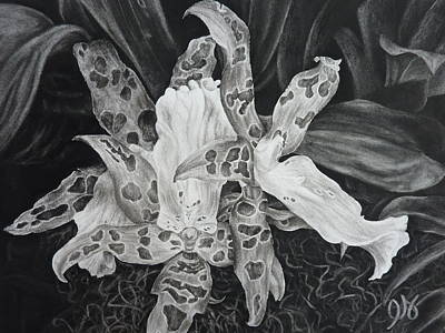 Drawing - Triple Orchid Blossom by Estephy Sabin Figueroa