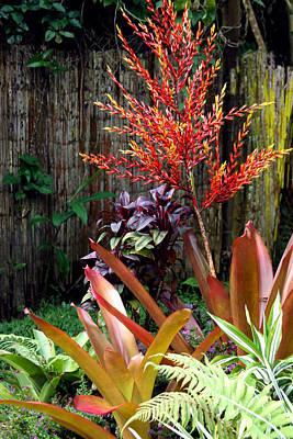 Bamboo Fence Photograph - Tropical Garden by Karon Melillo DeVega