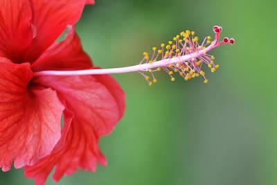 Hibiscus Photograph - Tropical Jewel by Melanie Moraga