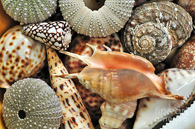Tropical Shells Print by Kaye Menner