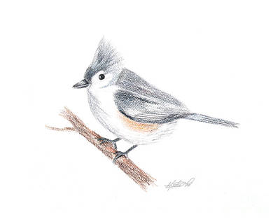 Titmouse Drawing - Tufted Titmouse Bird by Kristen Fox