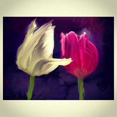 Tulips Photograph - Tulip Love by Paul Cutright