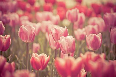 Tulip Print by Pan Hong