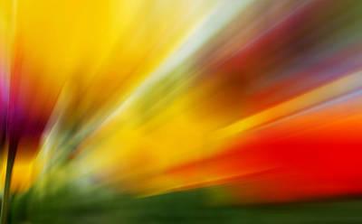 Tulip Art Photograph - Tulips -2 by Mark Ashkenazi