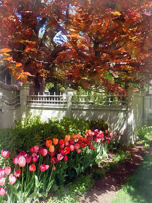 Shadows Photograph - Tulips By Dappled Fence by Susan Savad