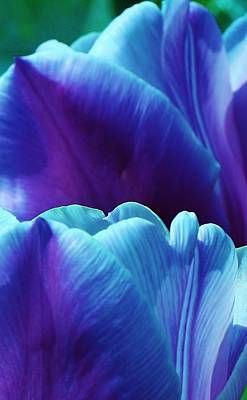 Tulips Of A Different Color Print by Bruce Bley