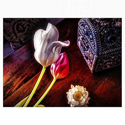 Tulips Photograph - Tulips With Jeweled Chest by Paul Cutright