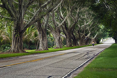 Tunnel Of Trees Print by Robert Smith