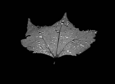 Rain Droplet Photograph - Turn Over A New Leaf by Betsy Knapp