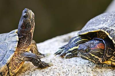 Green Eyes Photograph - Turtle Conversation by Elena Elisseeva