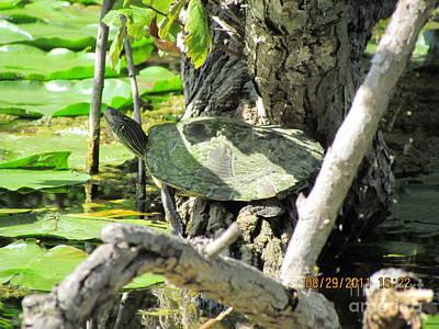 Turtle Sun Original by Thomas Sterett
