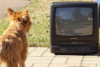 Tv Watching Dog Print by Susan Stone