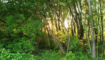 Twilight In The Woods Print by Anna Villarreal Garbis