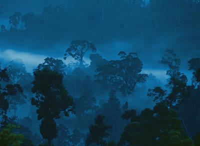 Danum Valley Conservation Area Photograph - Twilight View Of Fog Rising by Mattias Klum