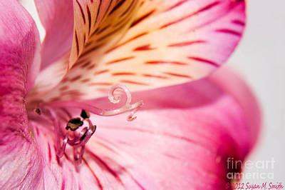 Susan Smith Photograph - Twirl And Curl by Susan Smith
