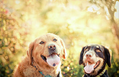 Panting Dog Photograph - Two Dogs by Jessica Trinh