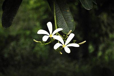 Two Flowers Print by Sumit Mehndiratta