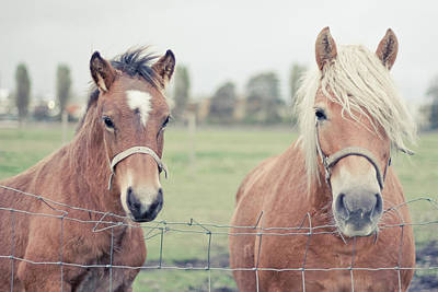 Two Horses Behind A Wired Fence Print by Cindy Prins