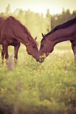 Two Faces Photograph - Two Horses In Field by Stefan Sager