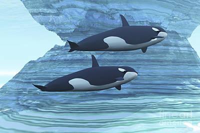 Two Killer Whales Swim Around Submerged Print by Corey Ford