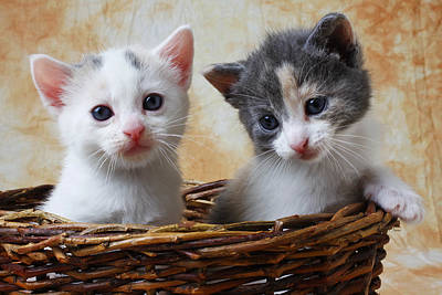 Two Kittens In Basket Print by Garry Gay