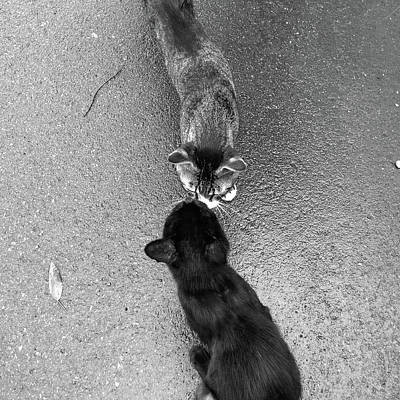 Two Kittens Which Kiss Print by photographer, loves art, lives in Kyoto