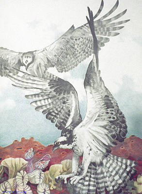 Two Ospreys Print by Kyra Belan