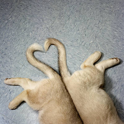 Two Puppy Tails In Heart Shape Print by GK Hart/Vikki Hart