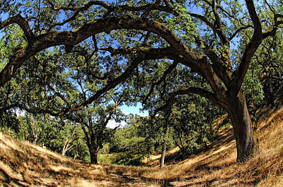 Under The Oak Canopy Print by Donna Blackhall