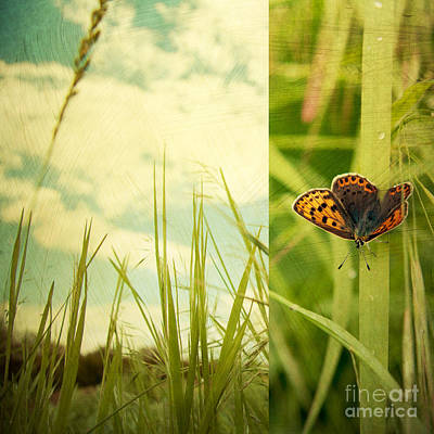 Butterfly Photograph - Unveil by Violet Gray