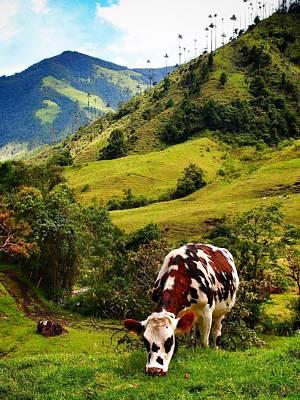 Vaca Print by Skip Hunt