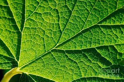 Vascular Networks A Leaf Foliage Abstract Print by John Kelly